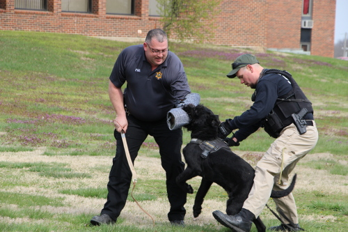 Two police officers and a police dog demonstrating how the dog attacks and how he is controlled.