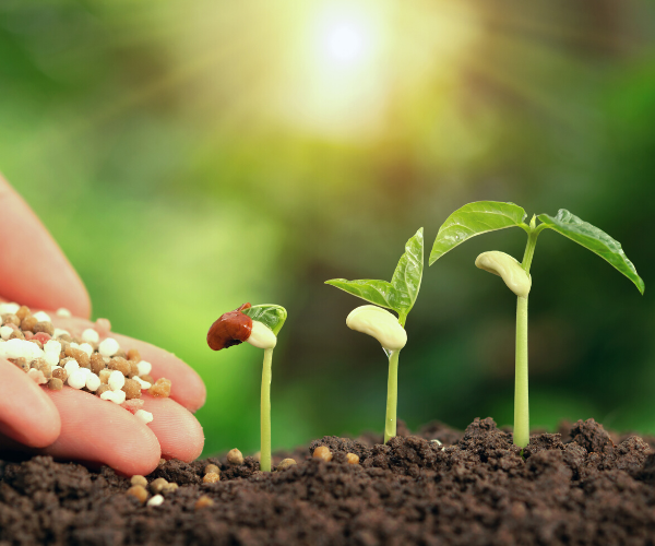 picture of someone planting seeds and plants growing