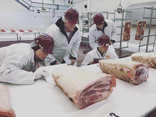 Four students from the Meat Judging Team examining large slabs of meat on a table.