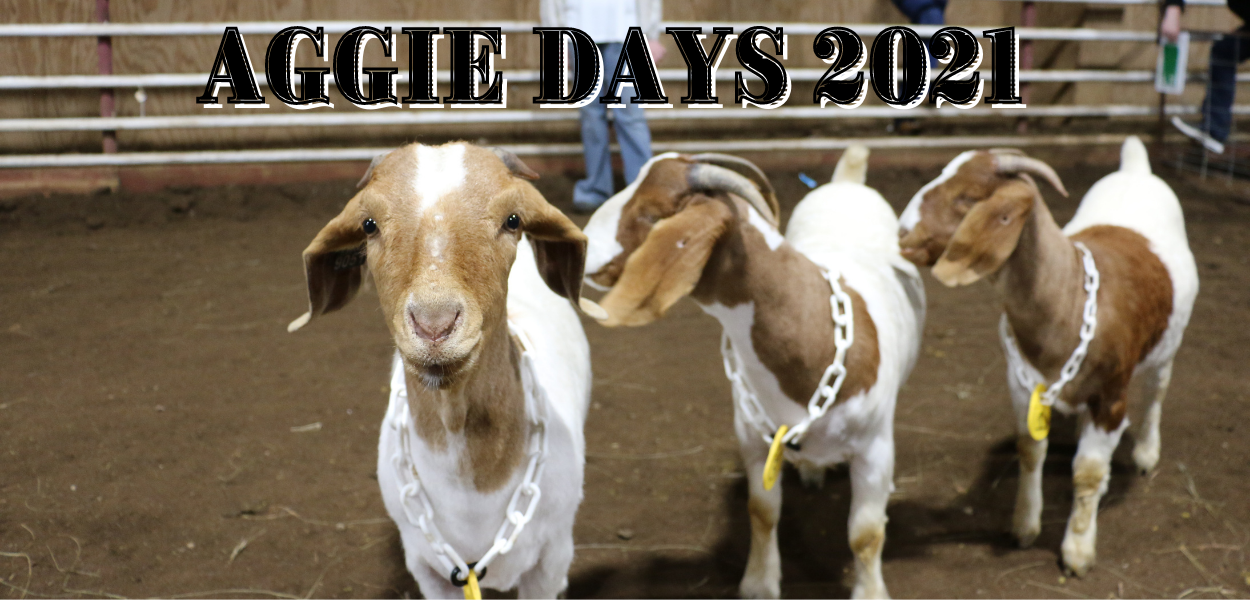 "picture of a group of goats with ""AGGIE DAYS 2021"" at the top"