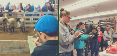 picture of a student judging sheep on the left and students judging meat on the right